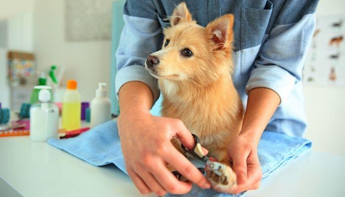 Consejos para cortar el perro`s Nails