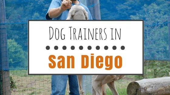 6 Mejores entrenadores de perros en san diego