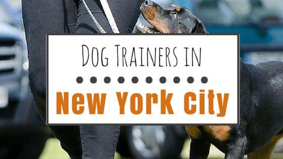 6 Top-de-clase de los entrenadores de perros en nueva york
