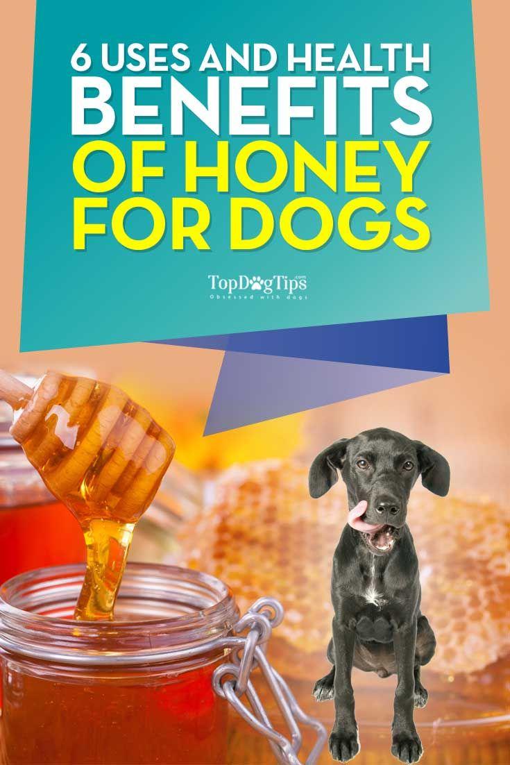 Mejor uso y beneficios para la salud de la miel para perros