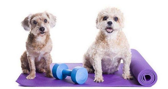6 Consejos para ejercicios de invierno para su perro