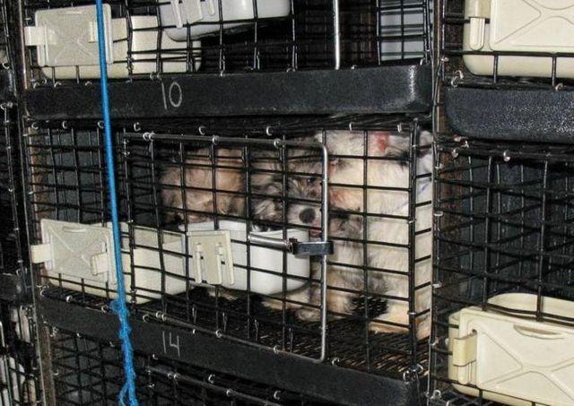 67 Los cachorros encontrados amontonados van detrás de una nueva tienda de jersey de mascota