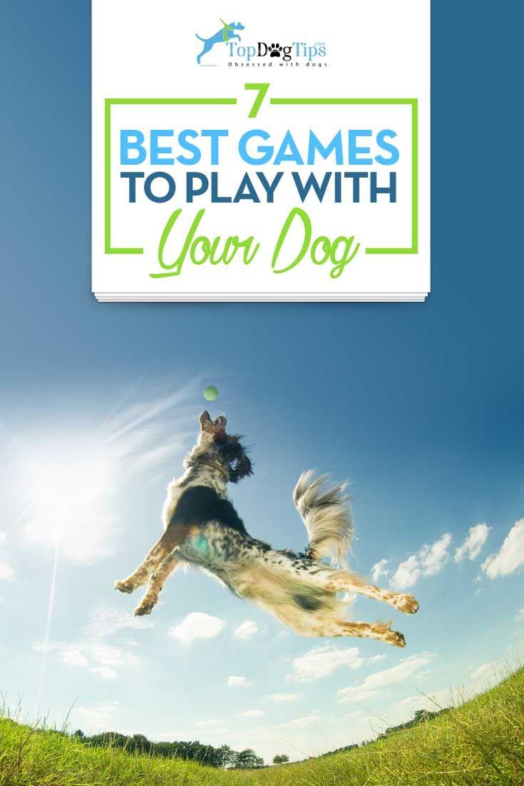 Top mejores juegos para jugar con los perros