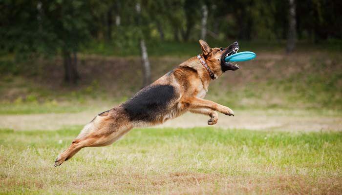Mejores Juegos para jugar con su perro