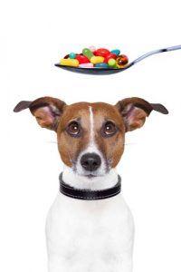 Dando complementos para mascotas para perros