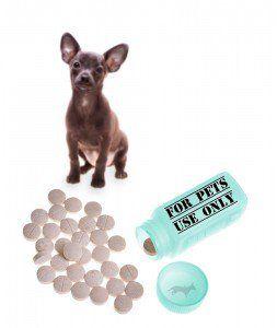 Vet mejores suplementos recomendados para perros