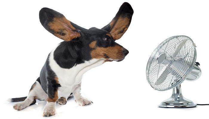 Maneras de mantener su perro fresco en verano