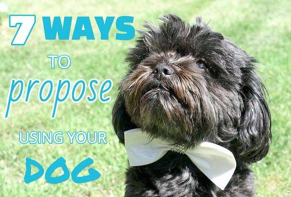 7 Maneras de utilizar su perro en su propuesta