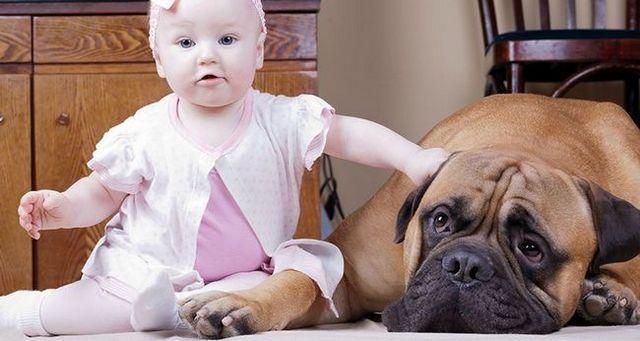 7 Maneras de su perro puede ayudar con su nuevo bebé