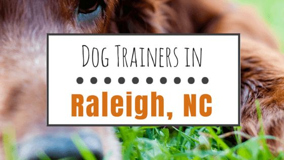 8 Entrenadores de perros impresionantes en raleigh, carolina del norte