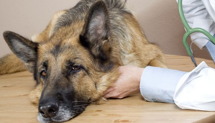 Que causan cáncer productos del perro y cómo mantener a sus mascotas lejos de ellos