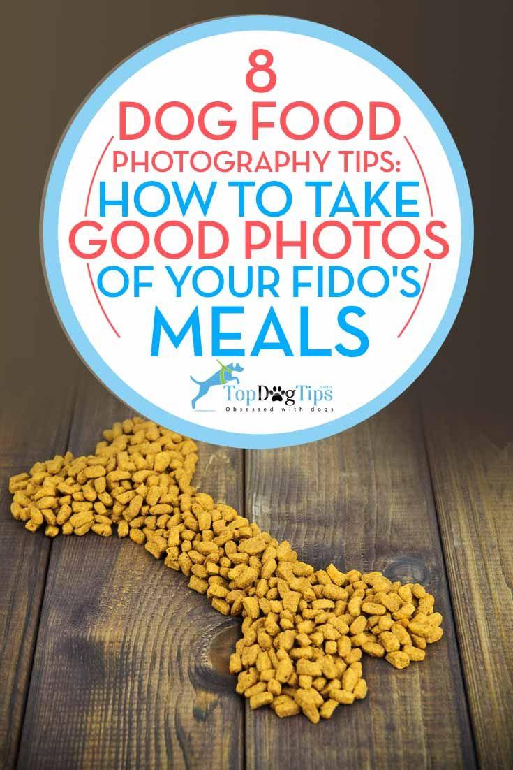 Mejores Consejos para perros Comida FotografГa