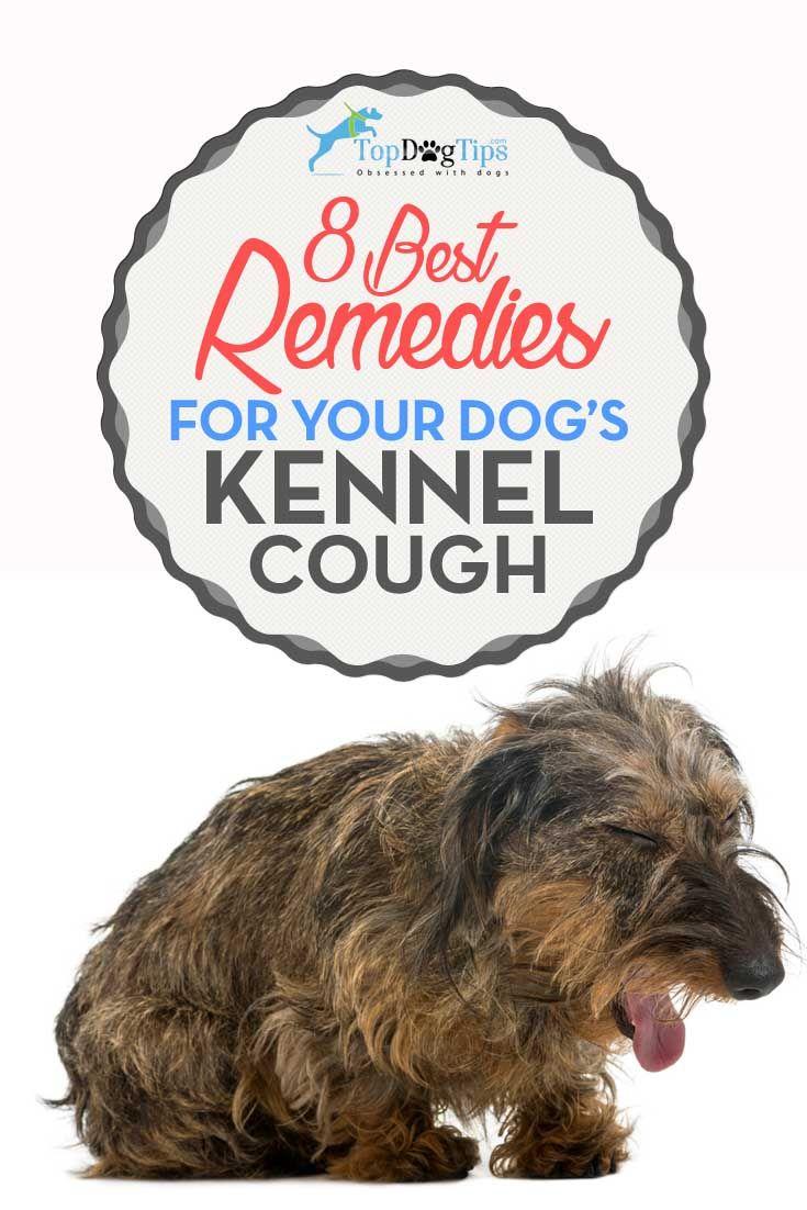Los mejores remedios para la tos canina de la perrera