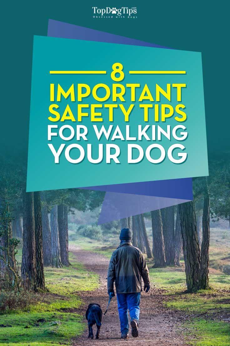 Consejos para pasear a su perro de forma segura todos los días individual