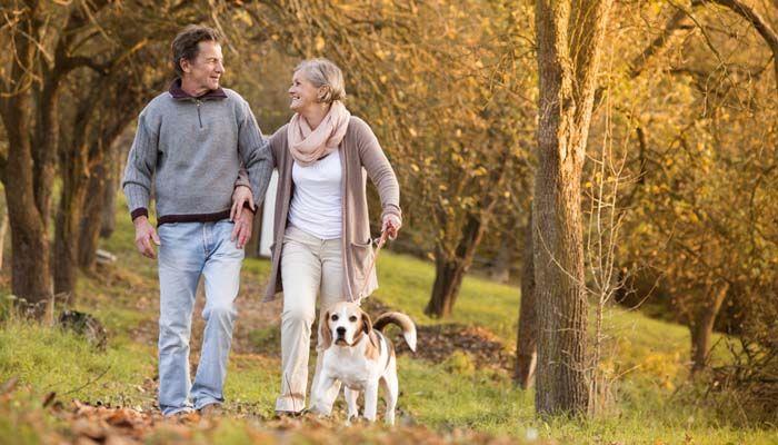 Pasear a su perro - Una guía para hacerlo con seguridad 2