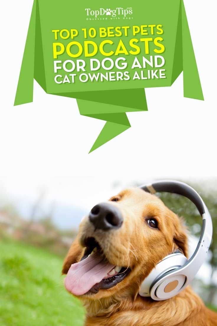 Top Ten de los mejores podcasts del perro para los dueГ±os de mascotas