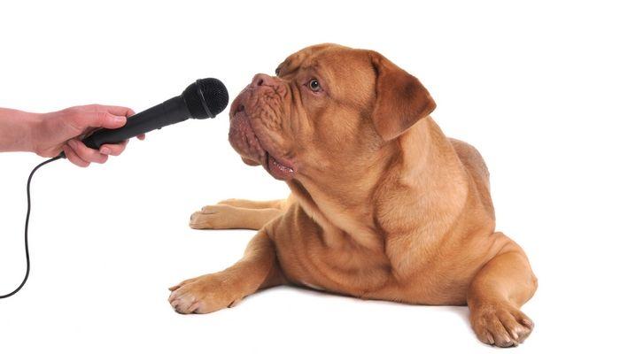 Mejores Podcasts perro para los dueГ±os de mascotas