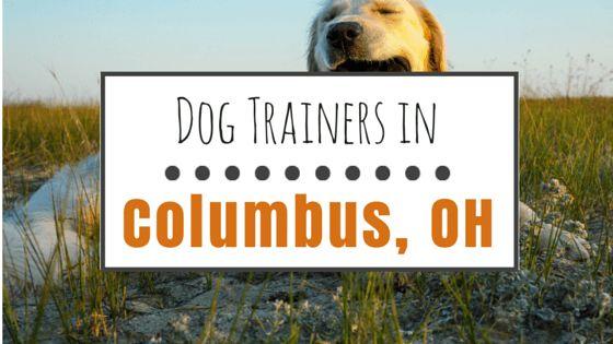 9 Los entrenadores de perros en columbus, oh que recomendamos