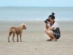 Herramientas Dog Photography