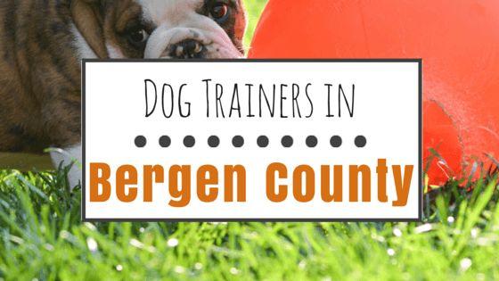 9 Grandes opciones para el entrenamiento del perro en el condado de bergen, nj