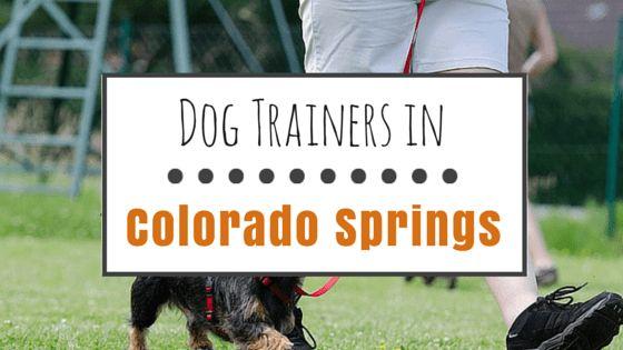 9 Entrenadores de perros muy recomendable en colorado springs