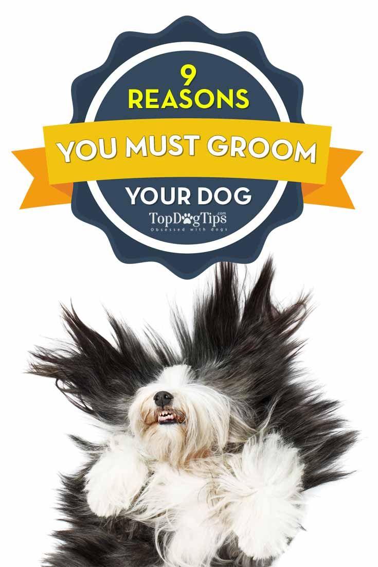 Las razones por las que necesita para preparar su perro