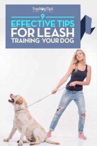 Consejos para el entrenamiento de perros Correa