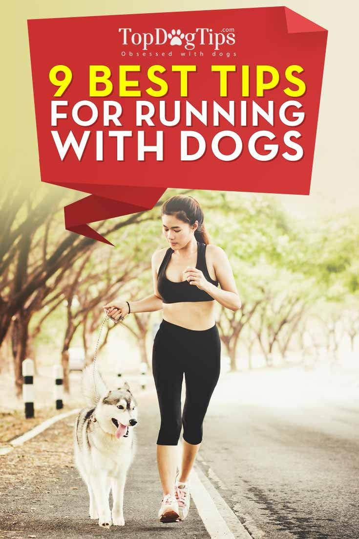 Los mejores consejos para que se ejecuta con los perros
