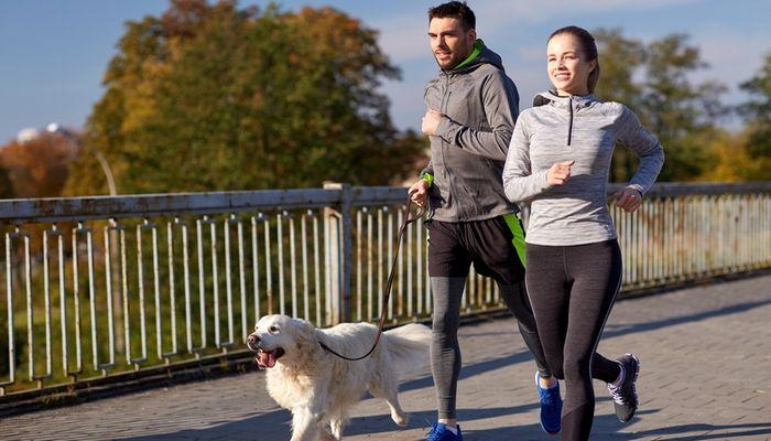 Llevar a su perro al veterinario antes de correr con los perros