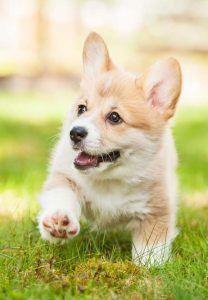 Correr con los cachorros