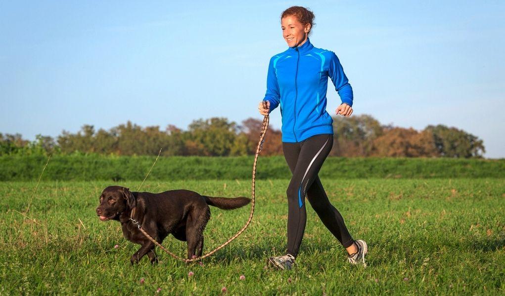 Entre en calor con su mascota antes de correr con los perros