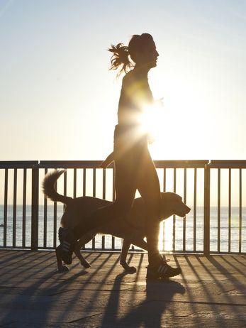 Mire hacia fuera para el dolor cuando se ejecuta con los perros