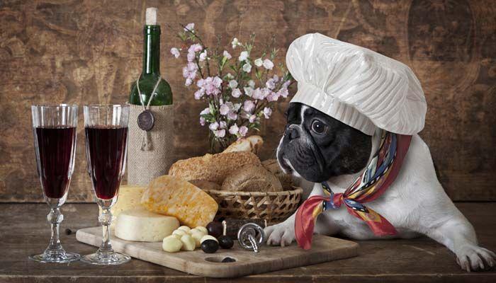 comida para perros para reducir la excreciГіn
