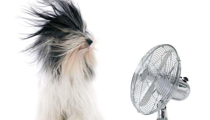 Blow perros secos para reducir la excreción en perros