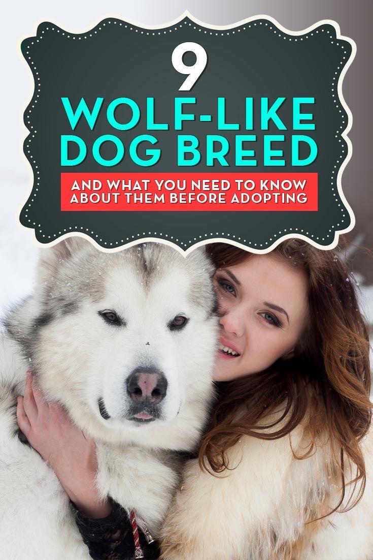 Wolf-Al igual que las razas del perro
