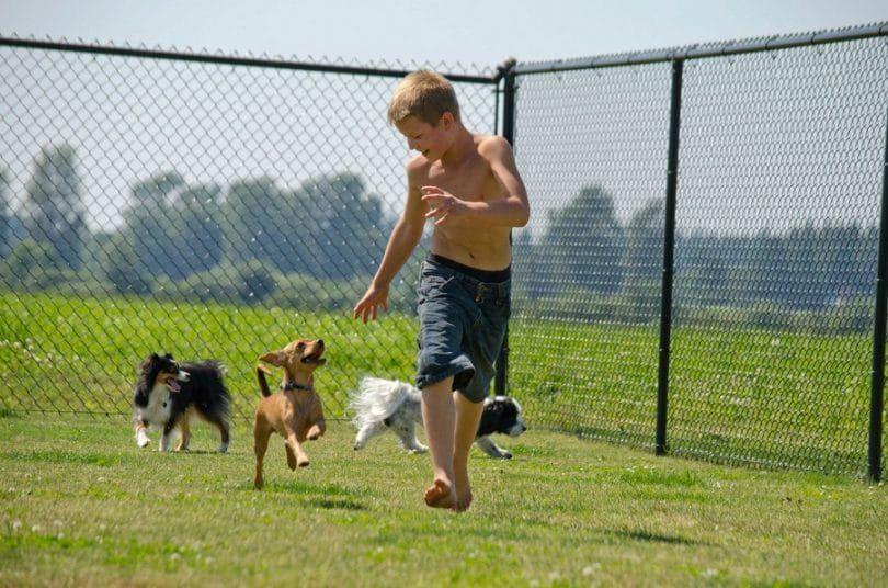 Perro que juega con el muchacho en la perrera