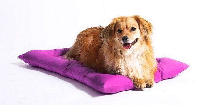 Un lugar propio: lo que debe buscar en camas para perros