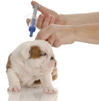 La vacunación de un cachorro