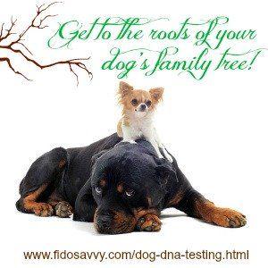 Acerca de las pruebas de adn de perro