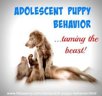Comportamiento de los cachorros de los adolescentes