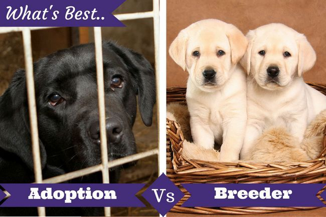 Aprobación vs criador por debajo de un laboratorio en una jaula y 2 perritos