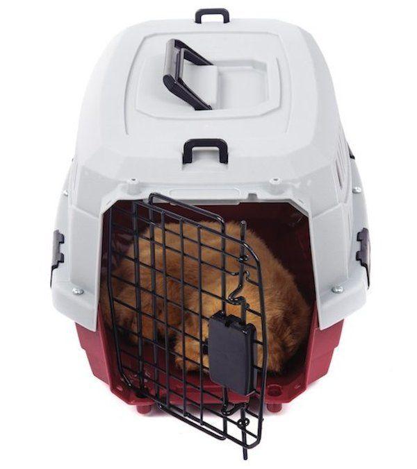 caja de viaje perro