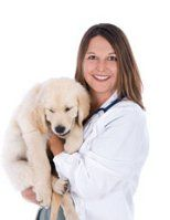 veterinario con cachorro de golden retriever