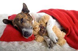 cachorro enfermo en la cama