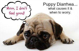 Todo sobre la diarrea cachorro