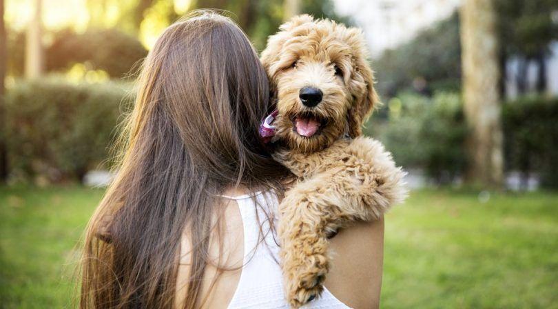 Alergia perros libres: 5 razas que no va a estornudar en usted