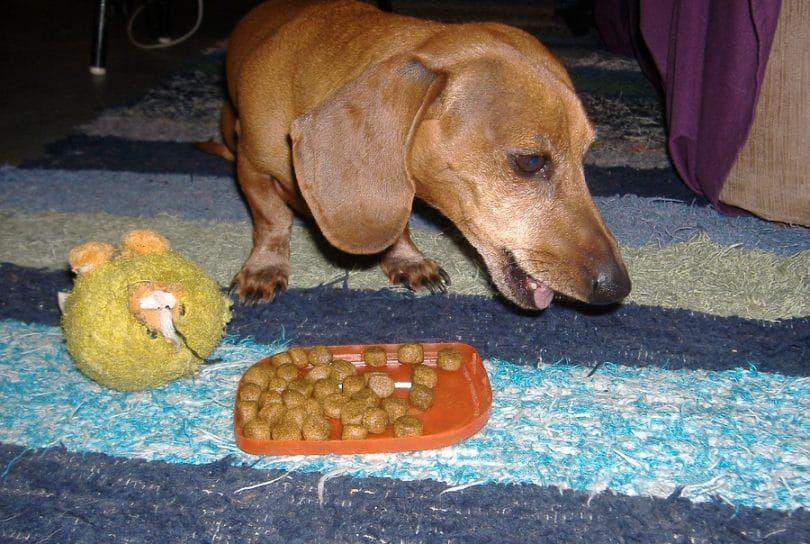 alergias a los alimentos para perros