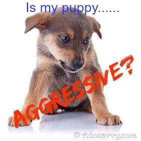 Un cachorro agresivo?