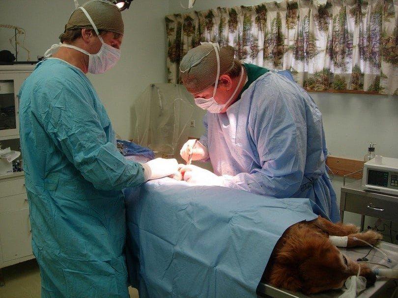 Perro en la cirugía