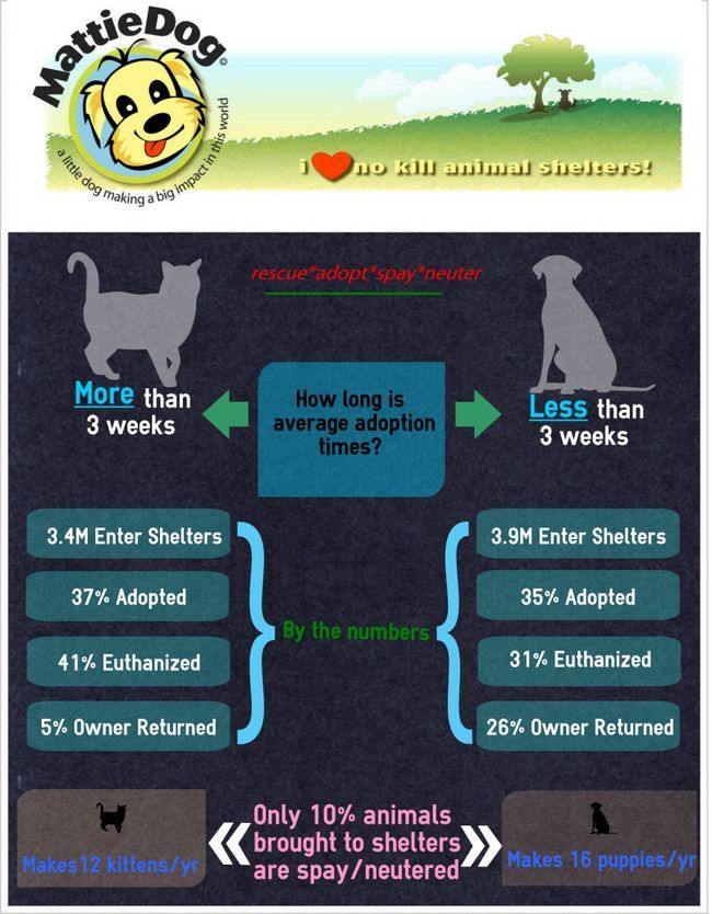 Adopción de animales cifras infografía